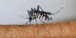 moustiques 1